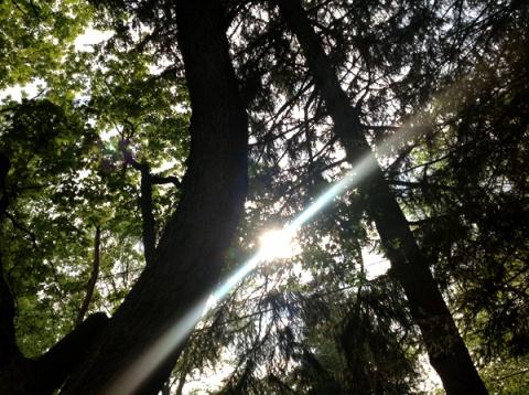 051513hammocktrees