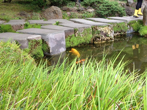 072814goldfishyelloboots